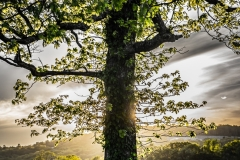 christopher_oconnor_SUNSET_TREEdigital_photography_2020_350.00