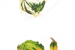 Gloria-Goguen-Gourds-Autumn-Central-Massachusetts-colored-pencil-19-3_4_-x-15-3_4_-2018-500-scaled