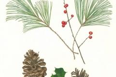Gloria-Goguen-Winter-Towel-Hill-Botanic-Garden-Boylston-Massachusetts-colored-pencil-25-1_2_-x-19-5_8_-2019-650-scaled